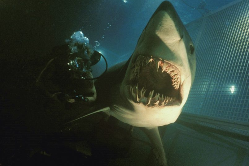 What Happened to Deep Blue Sea 2