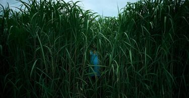 Netflix In the Tall Grass Trailer Sets To Scare